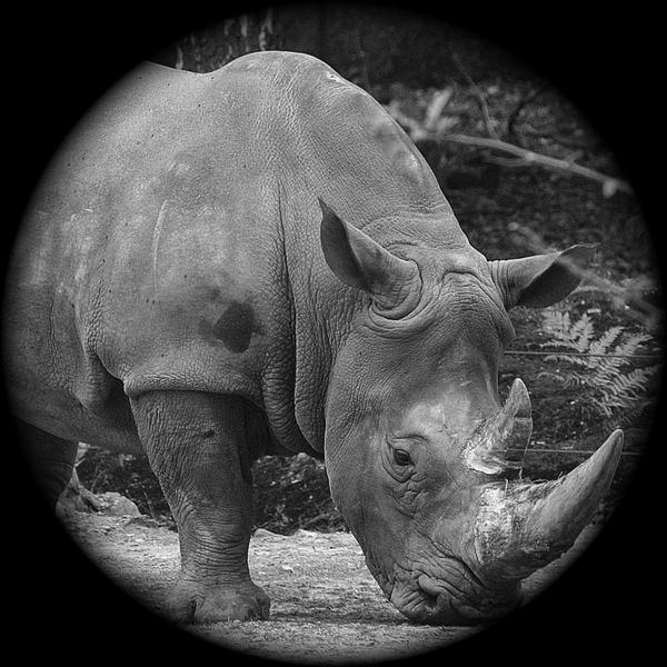 Passione Rhino